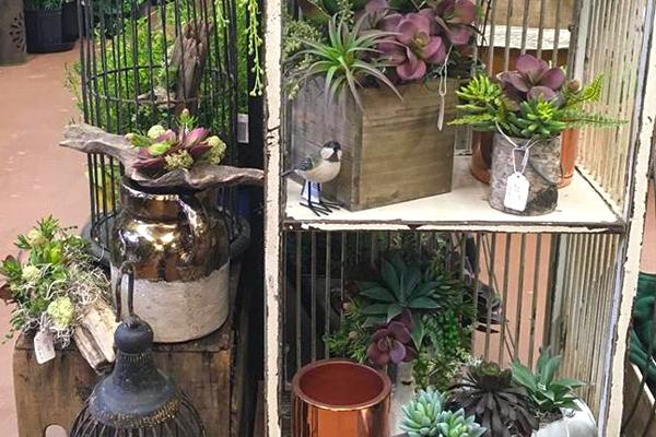 Planters & Permanent Plants