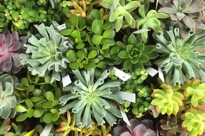 Plants & Flora Gallery