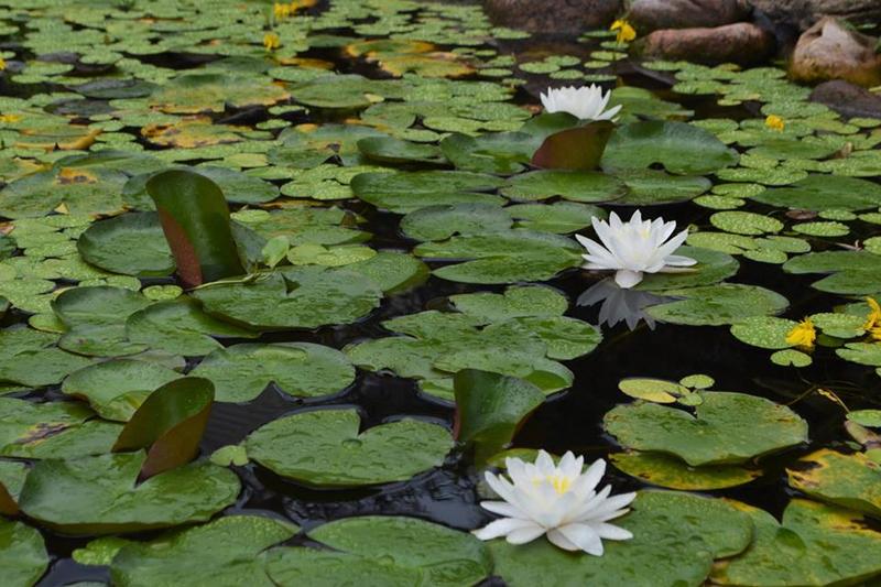 Water Garden Gallery