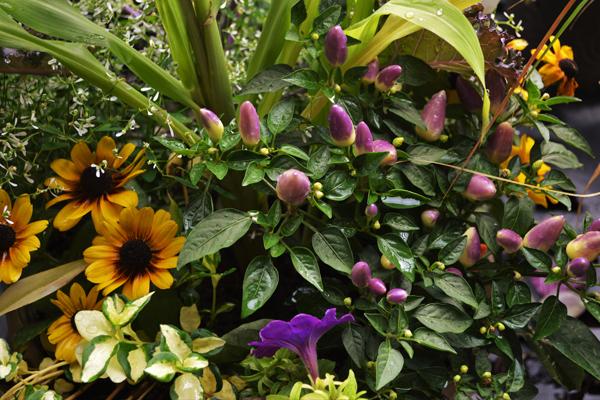 Fall Plant Assortment