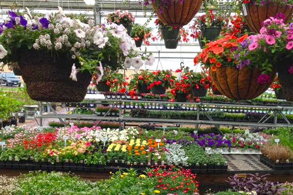 Annuals & Hanging Baskets