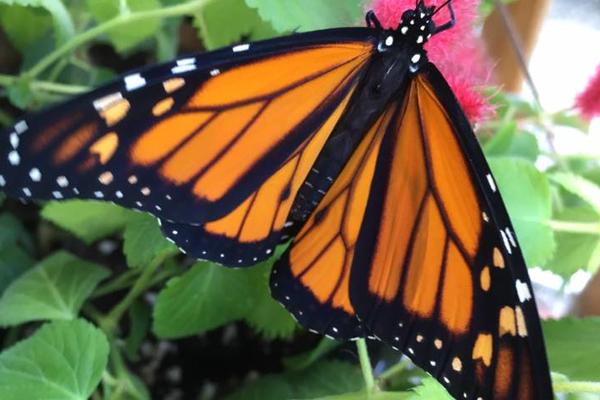 Butterflies Love Our Flowers