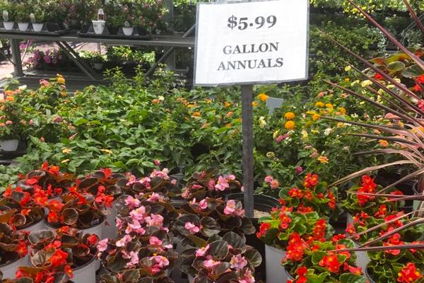 Gallon annuals make great fill-in plants