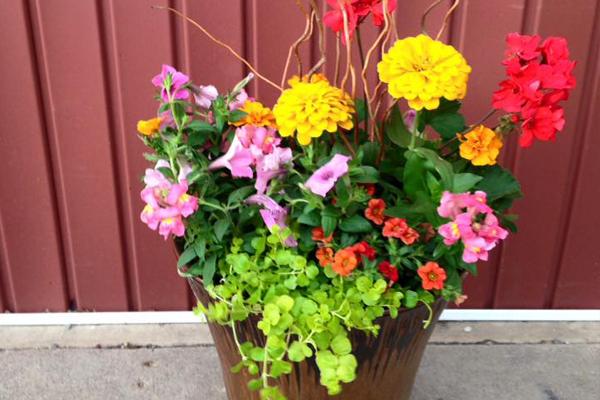 Sun Loving Geranium Planter