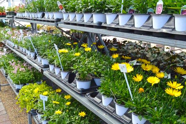 4-inch Annuals & Perennials