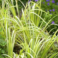 Oxygenating Grasses